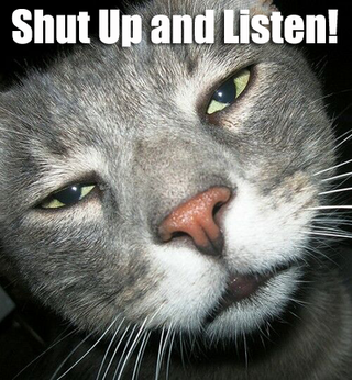 1shut-up-cat