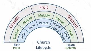Life cycle 2